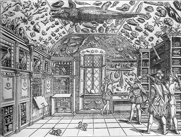 Breve Historia del Coleccionismo IV – Las Wunderkammern y los Gabinetes de Historia Natural